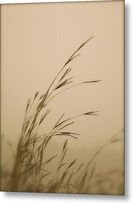 In The Fog Metal Print by Tim Good