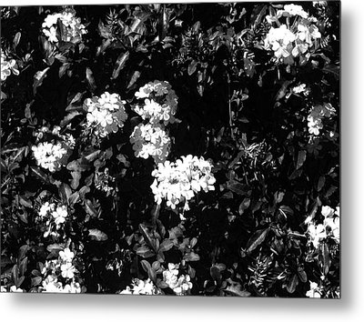 Metal Print featuring the photograph In The Garden- Black And White by Alohi Fujimoto