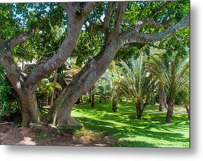 In The Garden. Mauritius Metal Print by Jenny Rainbow