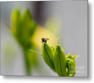 In The Garden - The Champ Metal Print