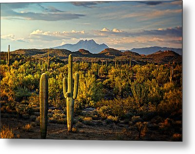 In The Golden Hour  Metal Print