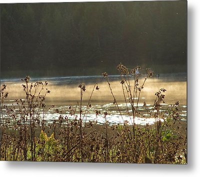 In The Golden Light Metal Print by Mary Wolf