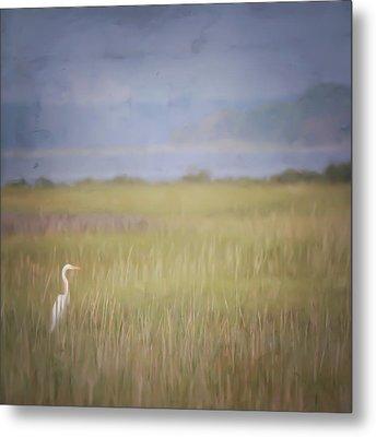 In The Marsh  Metal Print by Kerri Farley