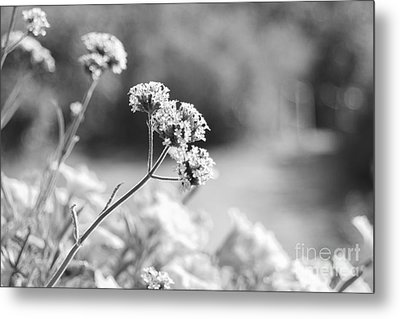 In The Meadow Metal Print by Barbara Bardzik