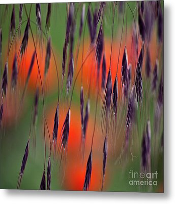 In The Meadow Metal Print by Heiko Koehrer-Wagner