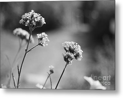 In The Meadow II Metal Print by Barbara Bardzik