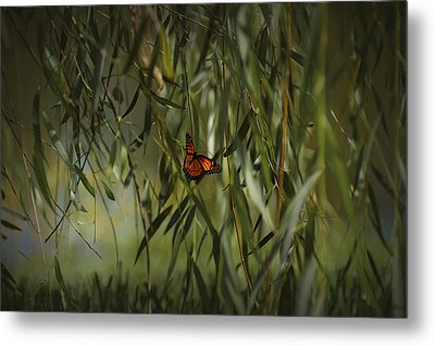 in the memory of Papillon Metal Print