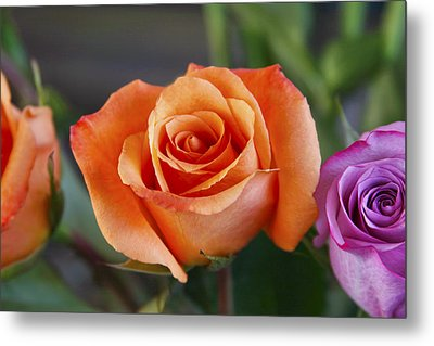 In The Middle Metal Print by Joan Bertucci