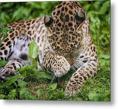 In The Moment Metal Print by Mary Lou Chmura