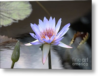 In The Morning Light Metal Print by Yvonne Wright