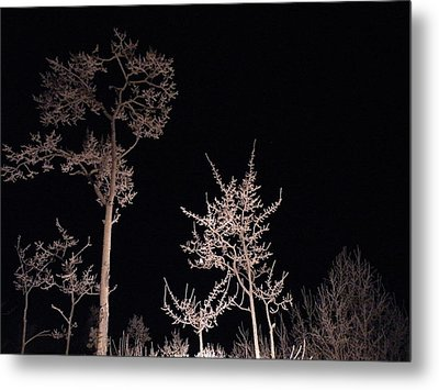 Metal Print featuring the photograph In The Night Garden by Brian Boyle