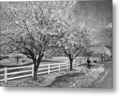 In The Park Metal Print by Debra and Dave Vanderlaan