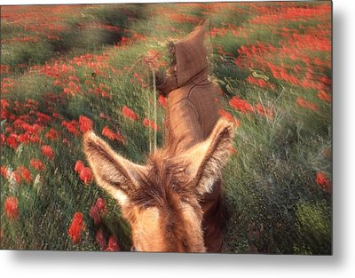 In The Poppy Fields Metal Print by Rolf Ashby