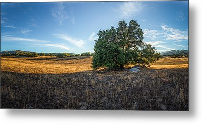 In The Shade Of An Oak Metal Print