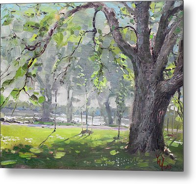 In The Shade Of The Big Tree Metal Print by Ylli Haruni