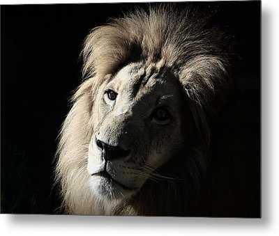 Metal Print featuring the photograph In The Shadows by Lisa L Silva