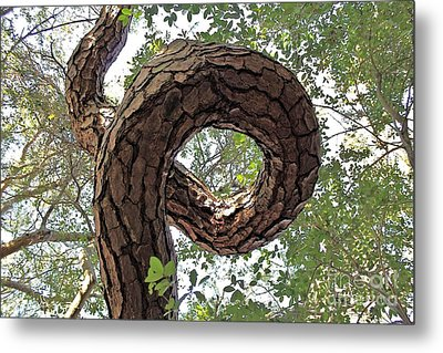 In The Spiral Of Life Always Reach For The Sky Metal Print by Kenny Sampson