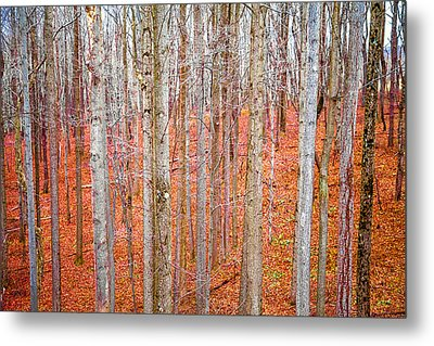 Metal Print featuring the photograph In The Sticks by April Reppucci
