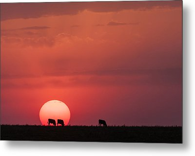 Metal Print featuring the photograph In The Sun by Scott Bean