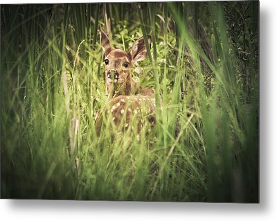 In The Tall Grass Metal Print by Shane Holsclaw