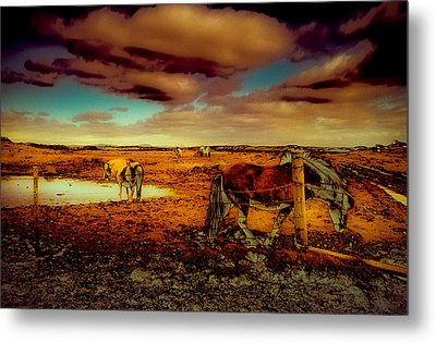 In The Tolt Metal Print by Roger Chenery