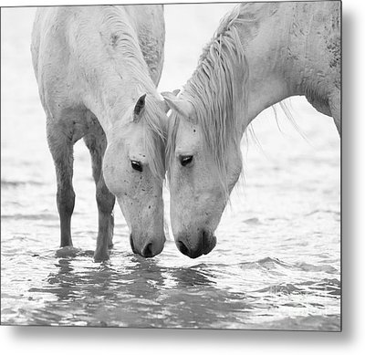 In The Water At Dawn II Metal Print