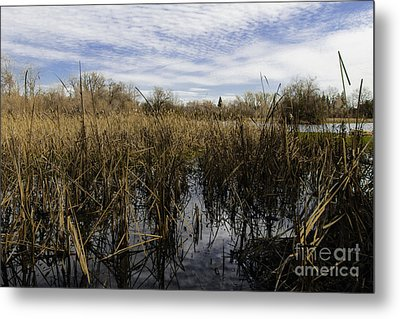In The Weeds Metal Print by David Taylor