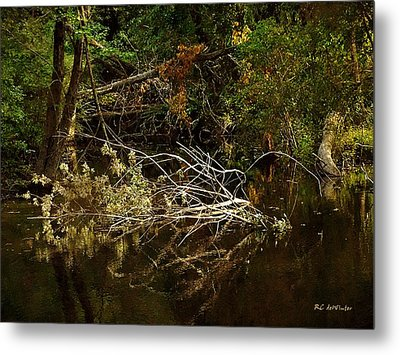 In The Wild Wood Metal Print by RC deWinter