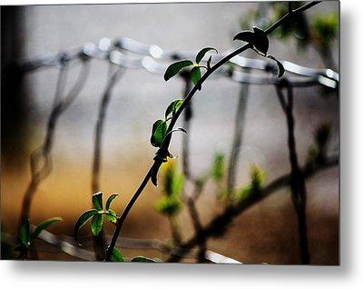 Metal Print featuring the photograph In The Wire  by Jessica Shelton