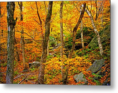 In The Woods Metal Print by Bill Howard