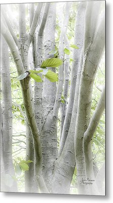 In The Woods Metal Print by Julie Palencia