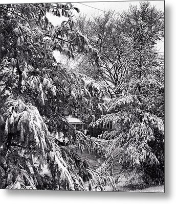 Metal Print featuring the photograph In Winter by Toni Martsoukos