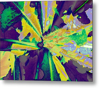 Metal Print featuring the photograph Incognito by Diane Miller