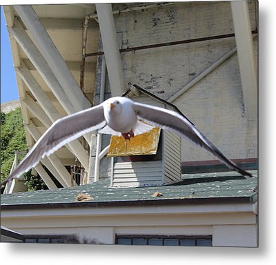 Incoming Seagull Metal Print
