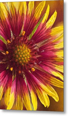 Indian Blanket Metal Print