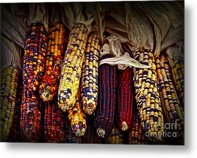 Indian Corn Metal Print by Elena Elisseeva