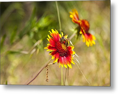 Indian Fire Wheels With Bee Metal Print by Mark Weaver