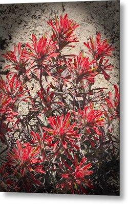Indian Paint Brush Metal Print by Daniel Hebard
