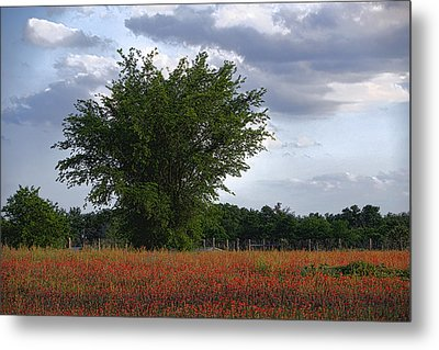Indian Paint Brush Revisited Metal Print by Linda Phelps