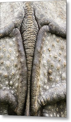 Indian Rhinoceros Tail Metal Print