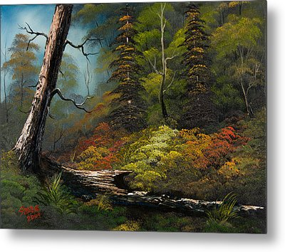 Secluded Forest Metal Print by C Steele
