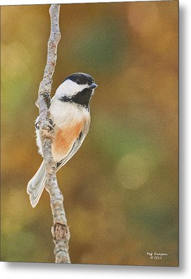 Indian Summer Chickadee Metal Print