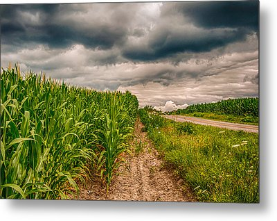 Indiana - Corn Country Metal Print