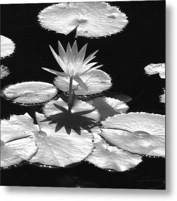 Infrared - Water Lily 02 Metal Print by Pamela Critchlow