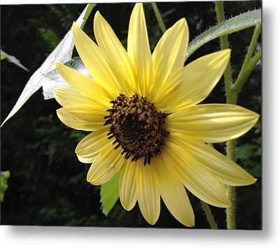 Metal Print featuring the photograph Inner Light by Alan Lakin