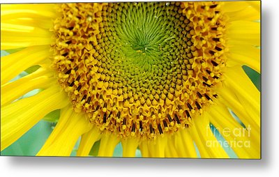 Inner Peace Forms Within This Sweet Yellow Sunflower Metal Print by Eunice Miller