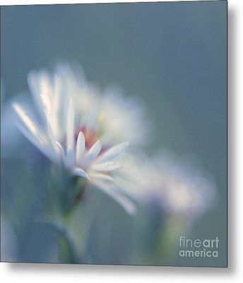 Innocence 03c Metal Print by Variance Collections