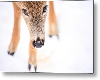 Innocent Eyes Metal Print