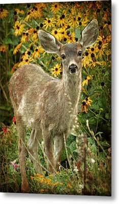 Metal Print featuring the photograph Innocent Fawn And Flowers by Peggy Collins