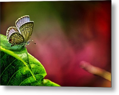 Innocent To This World Metal Print